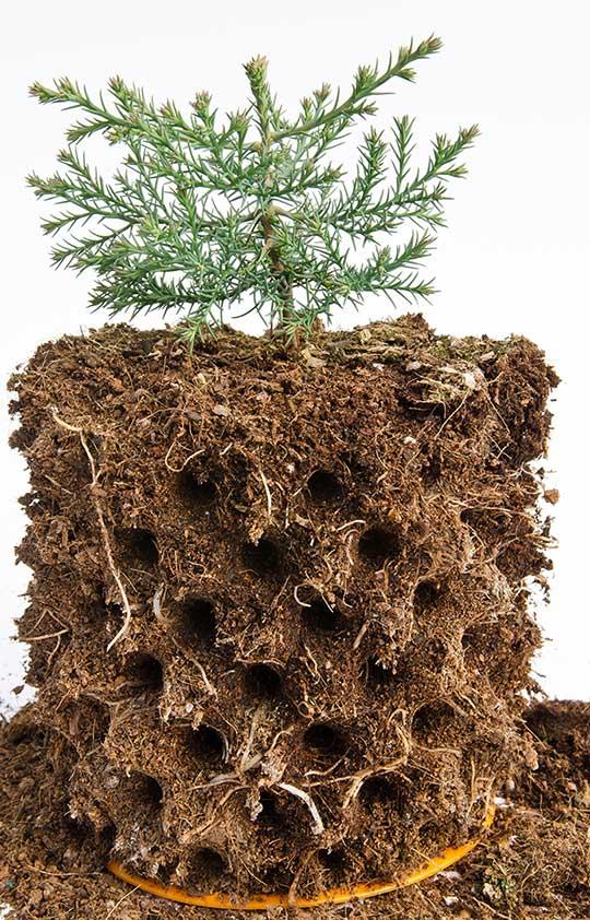 Bầu ươm cây Ecopot