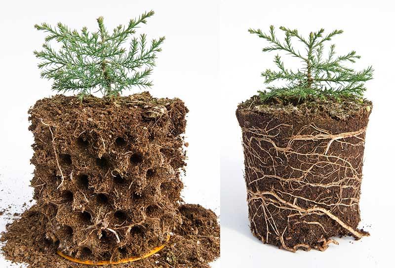 bầu ươm cây Ecopot 2 nitiko