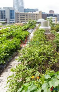 Cảnh quan vườn hoa trên sân thượng