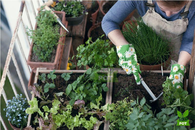 Tạo nên khu vườn rau xanh mát từ ban công nhà bạn
