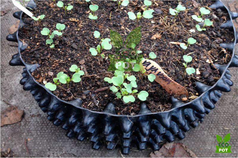 Ươm cây với bầu ươm thông minh Ecopot