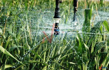 Dự án Tưới vườn rau trong chuỗi trường Tây Úc