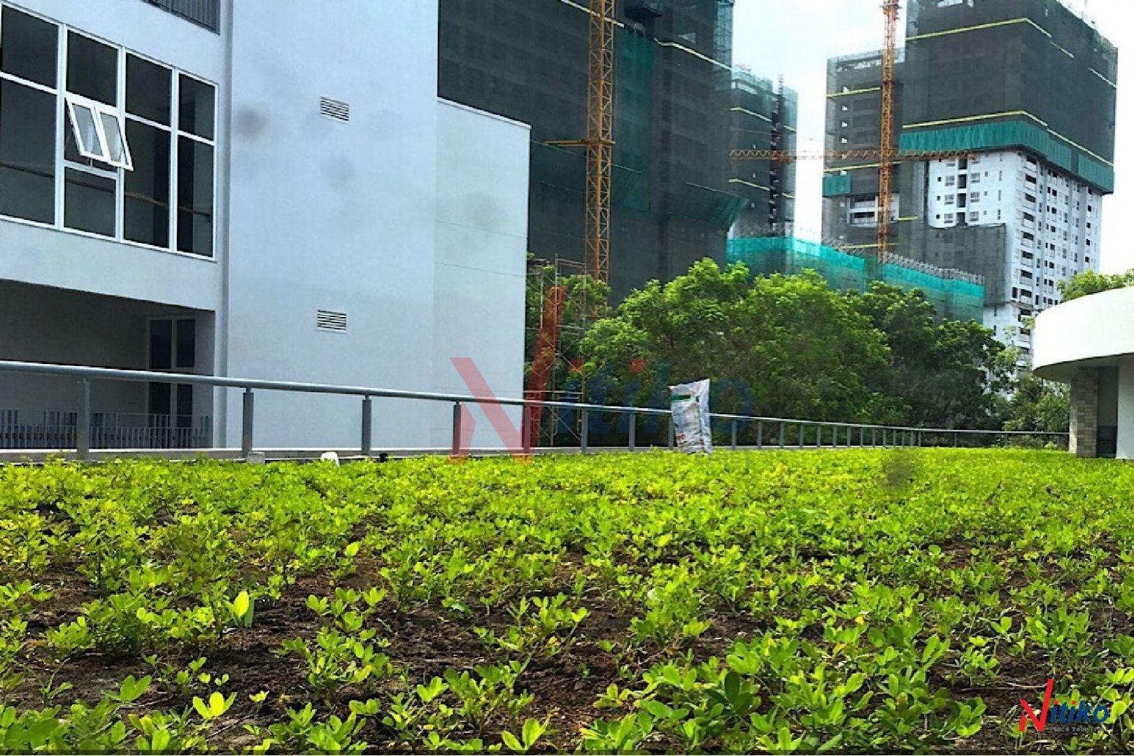 Vườn trên sân thượng khi sử dụng vỉ thoát nước Necty