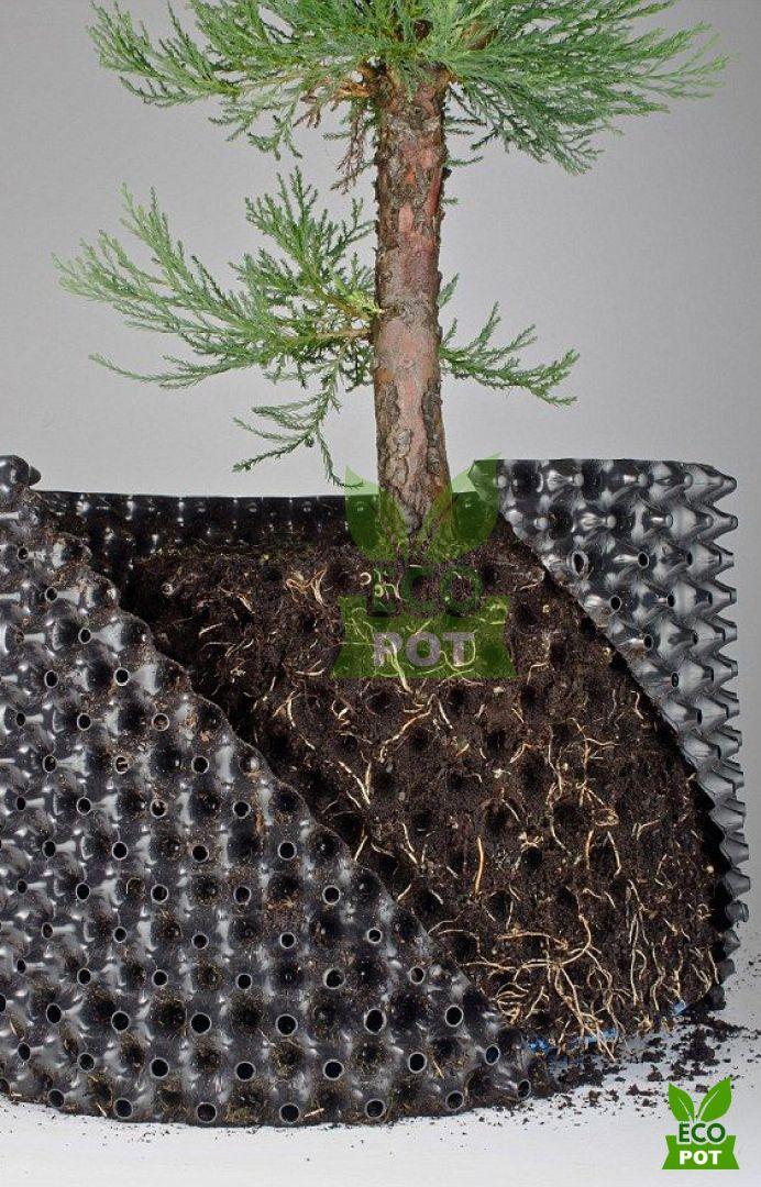 Việc di chuyển cây sang đất trồng sẽ dễ dàng hơn với bầu ươm cây Ecopot