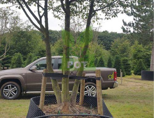 Hướng dẫn 5 bước chuyển cây từ bầu ươm ra đất trồng