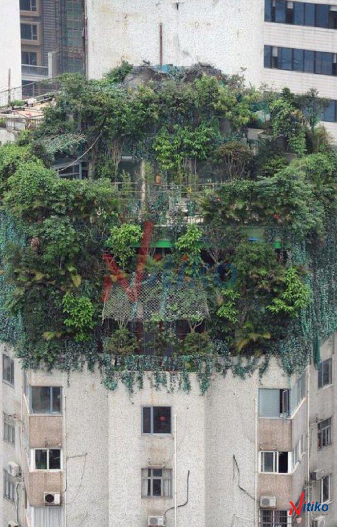 Chống thấm cho khu vườn xanh trên mái