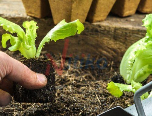 Tự hào khi dùng chính thực phẩm mình gieo trồng