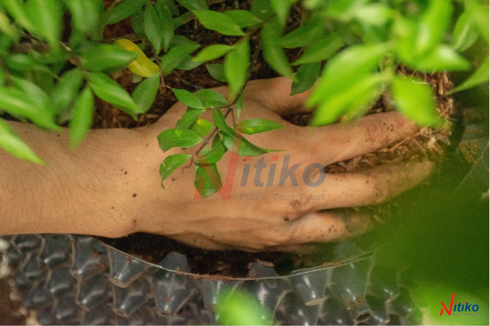 Quan sát cây trồng thường xuyên để chăm sóc cây hiệu quả nhất.
