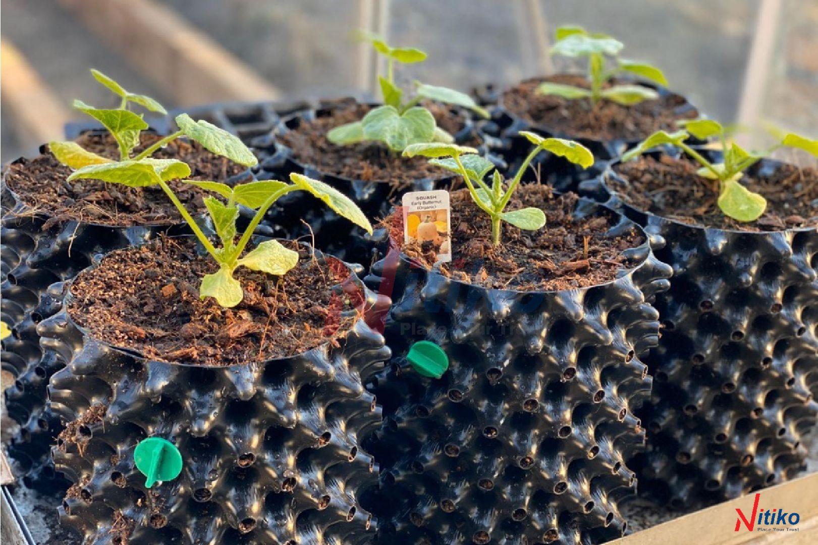 Bầu Ươm Rễ Cây Ecopot Bằng Nhưạ