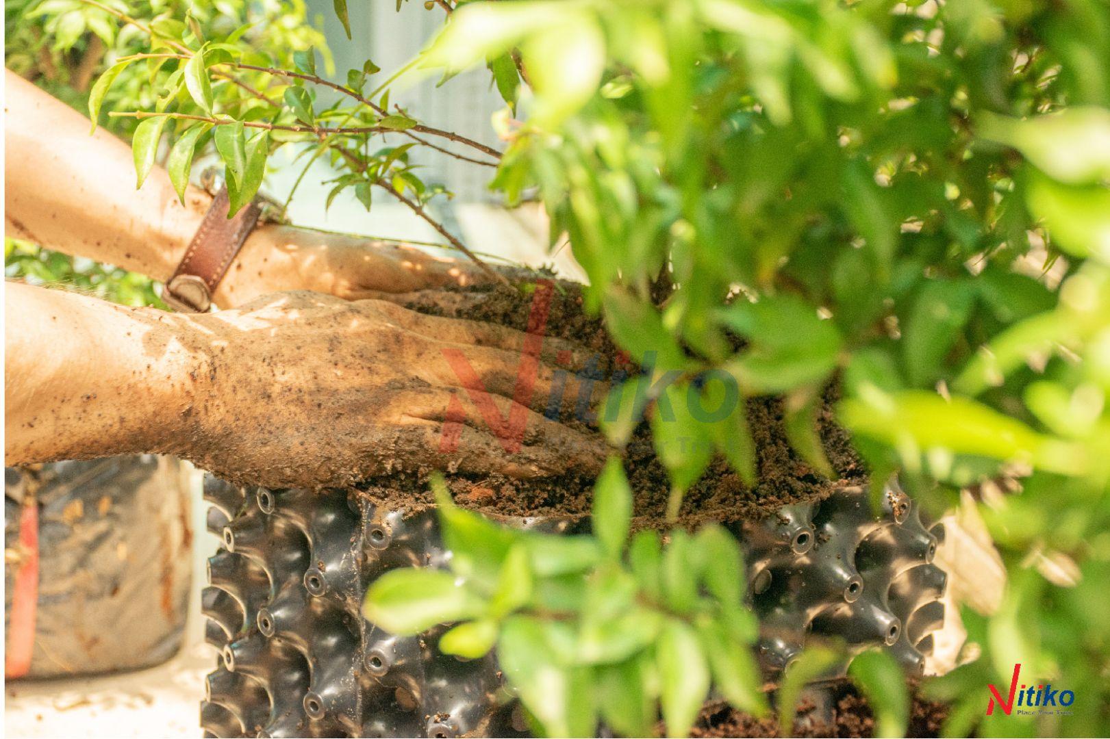 Chăm sóc cây cần nhiều thời gian và công sức
