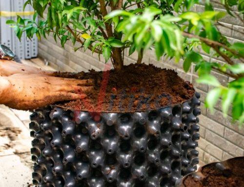 Cách nhận biết bệnh của cây trồng thông qua lá