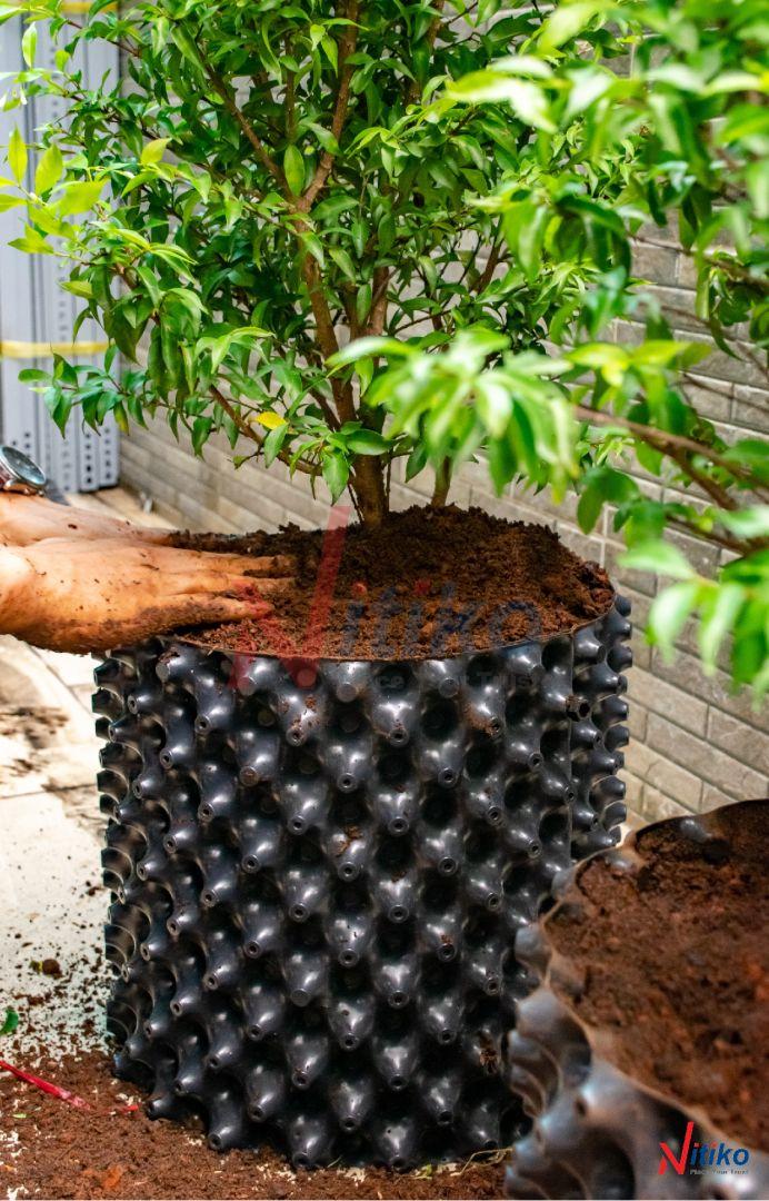 Cây trồng phát triển khoẻ mạnh trong bầu ươm rễ Ecopot