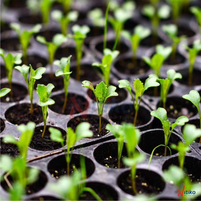 Khay ươm cây giống Ecotray
