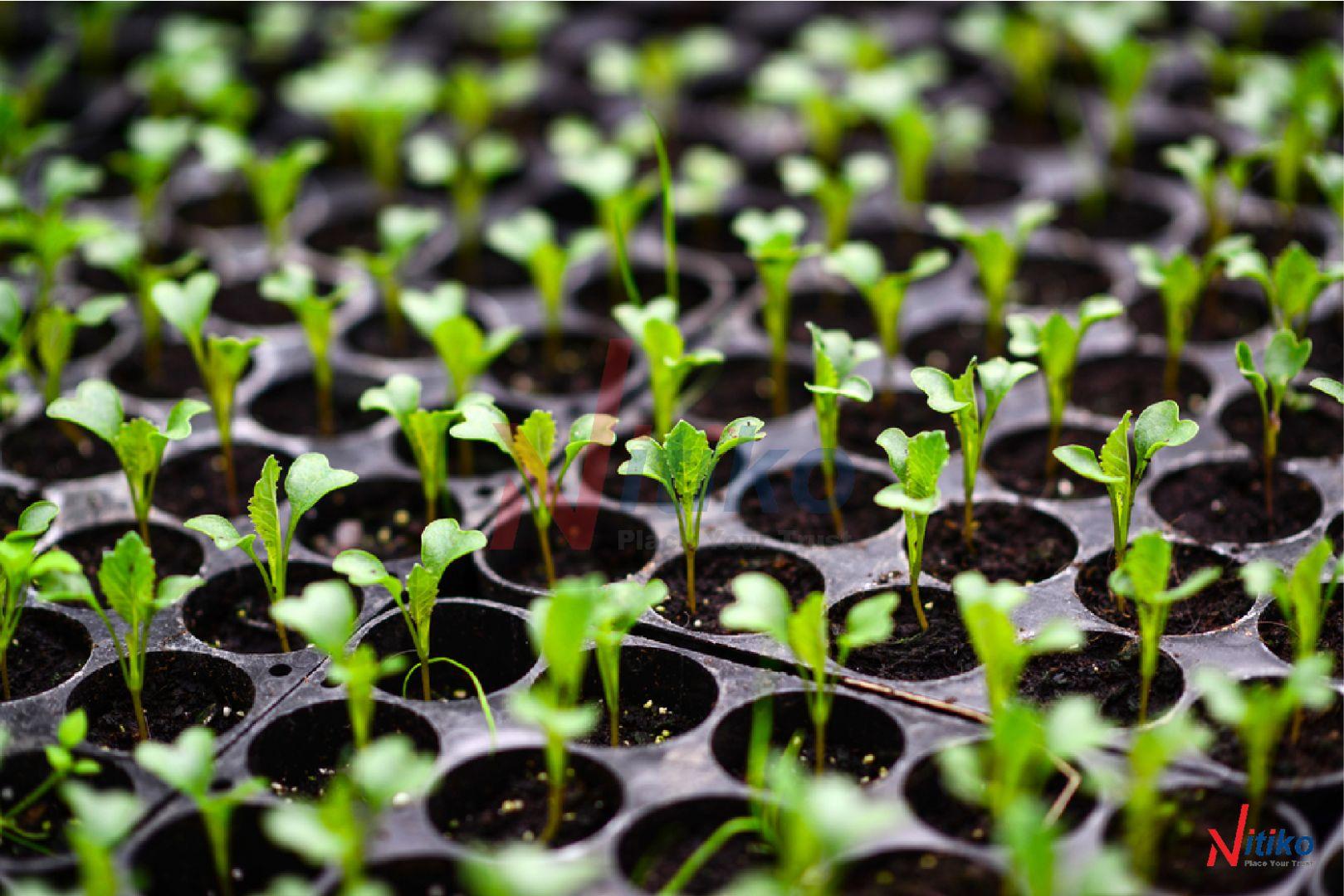 Khay ươm giúp tăng tỉ lệ nảy mầm cho hạt lên đến 98%