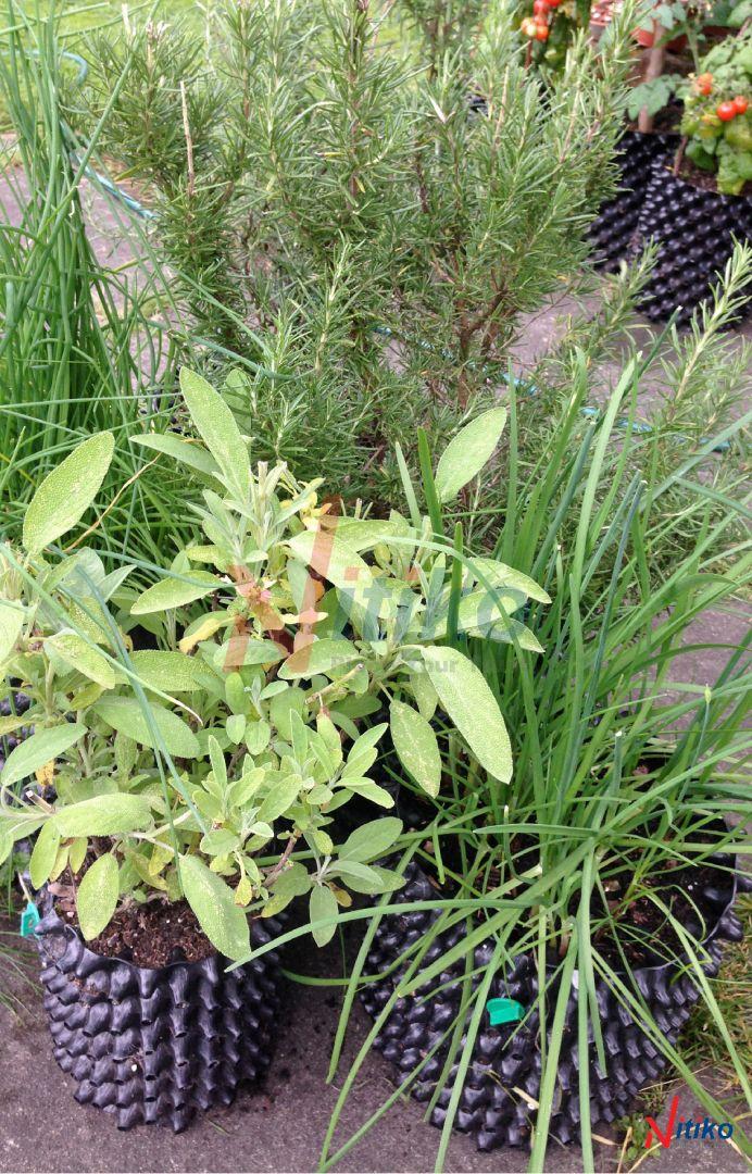 Thay thùng xốp bằng bầu ươm trồng cây sân thượng