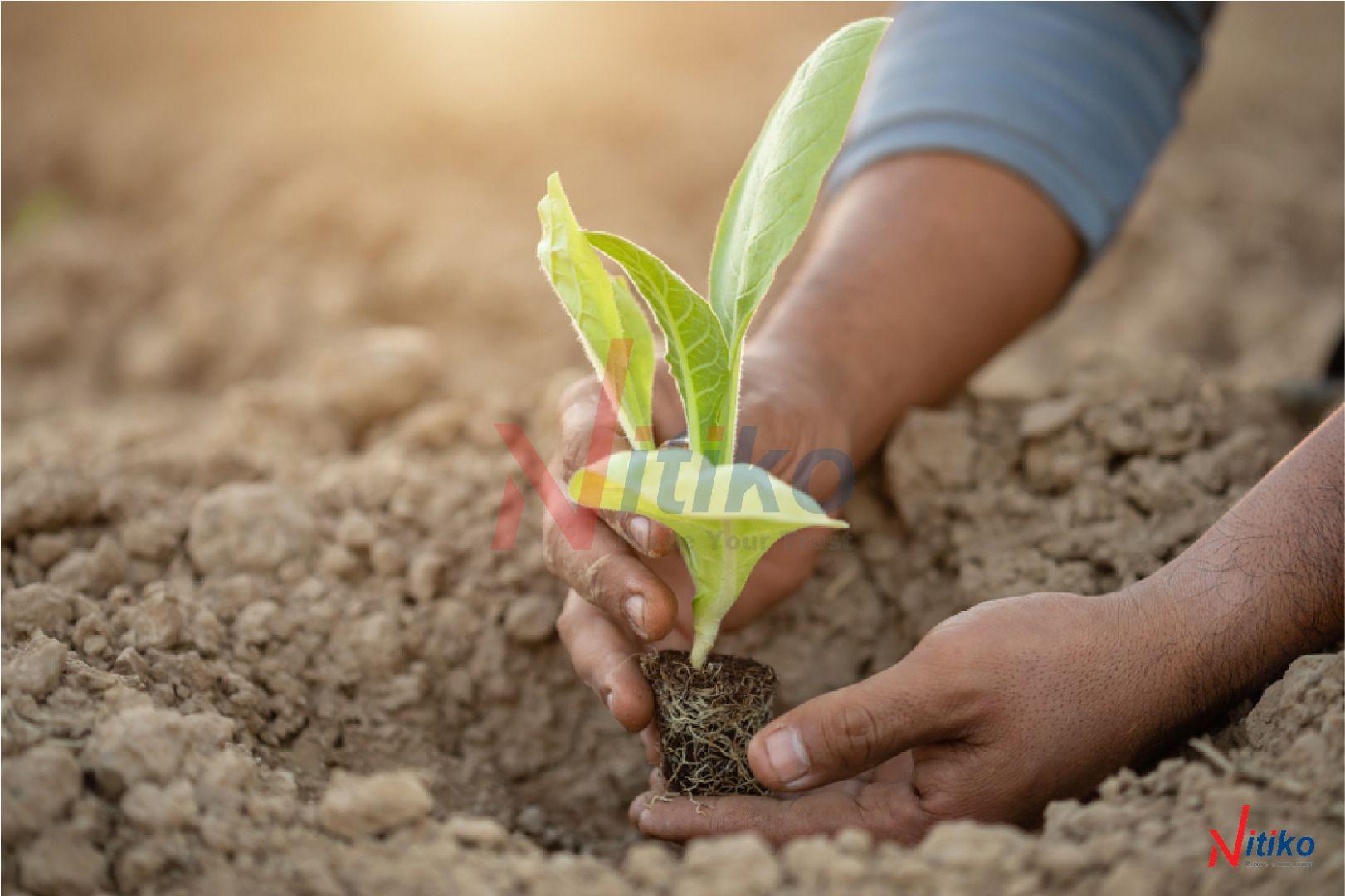 Cách gieo và ươm hạt giống truyền thống