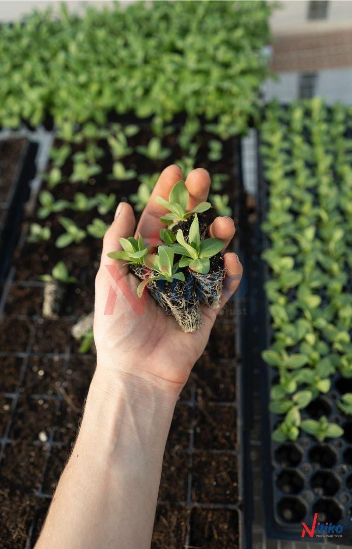 Cách gieo hạt giống trong khay ươm
