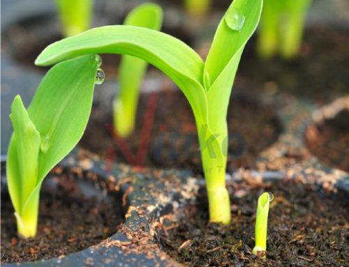 Nơi mua khay ươm hạt giống uy tín nhất năm 2021
