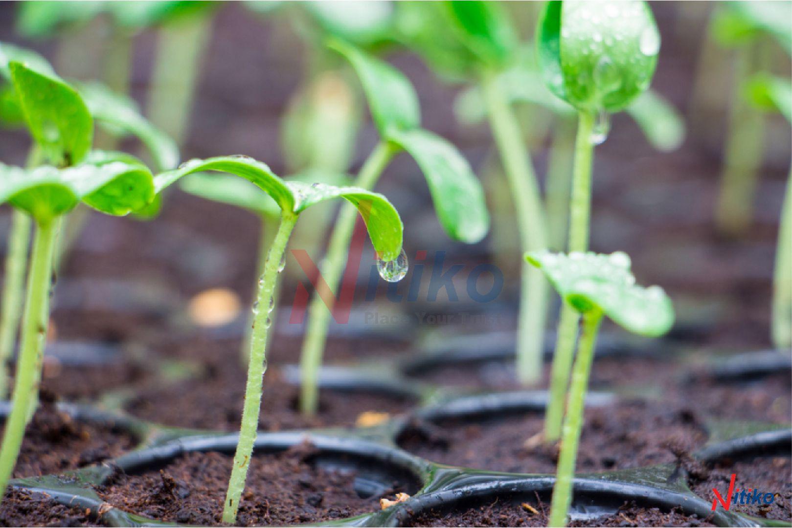 Cách ươm cây giống đạt năng suất cao