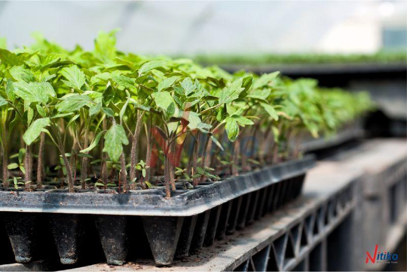 Khay ươm bảo vệ hạt giống khỏi nhiều nguy cơ tiềm tàng